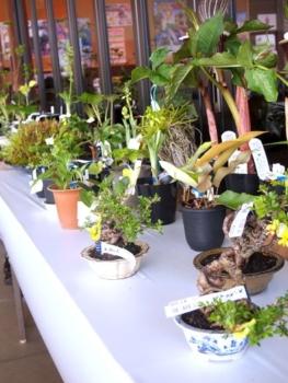 緑花木市場