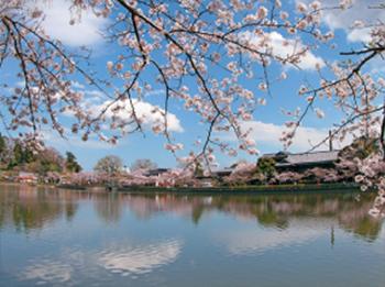 東金桜まつり